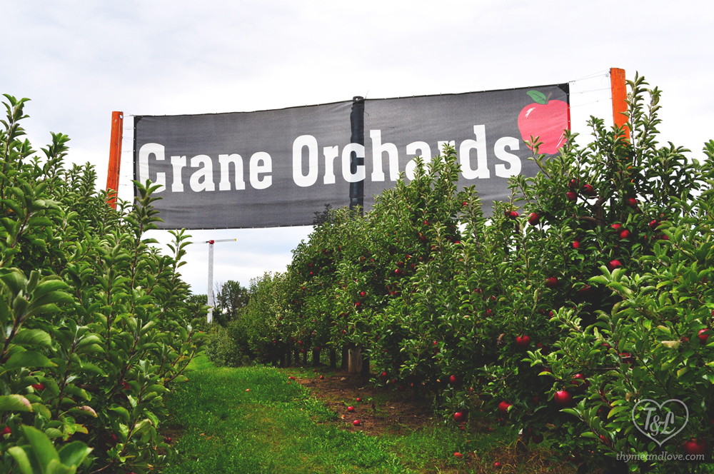 Crane's Orchard in Fennville, Michigan
