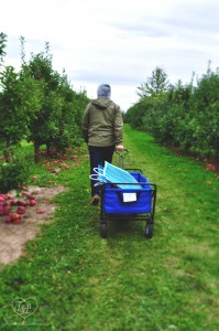 Apple Picking at Crane's Orchard in Fennville, Michigan