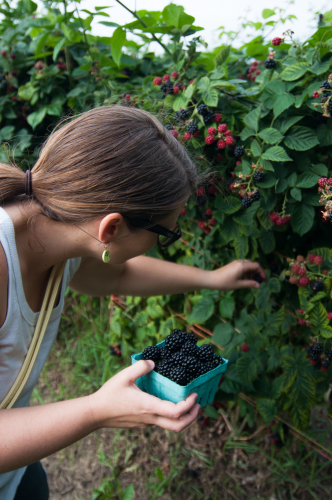 Blackberry Picking at a local berry farm in West Michigan. #puremichigan #summer