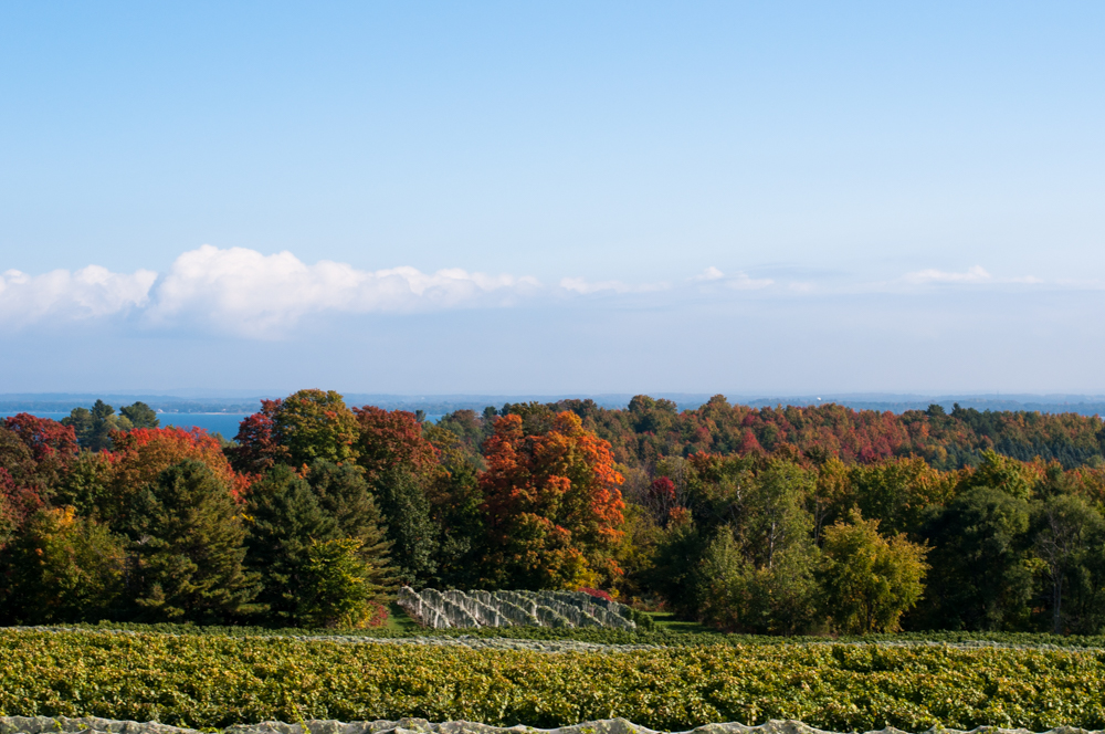 Traverse City Wine Tour with Traverse City Tours. #puremichigan #travel