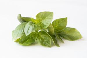 Lemon Basil is aromatic with a light lemon scent.