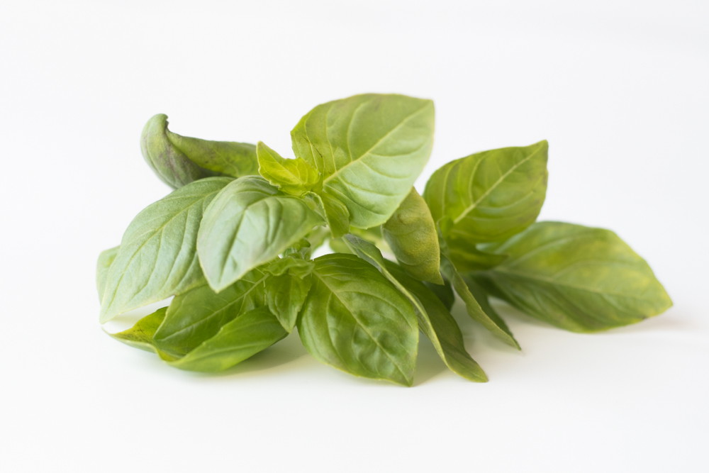 Lemon Basil is aromatic with a light lemon scent.