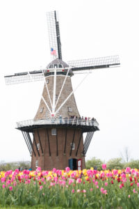 Tulip Time in Holland, Michigan. This is at Windmill Island Gardens, a must visit when in Holland