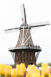A guide to Tulip Time in Holland, Michigan.