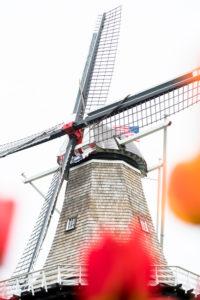 Tulip Time in Holland Michigan