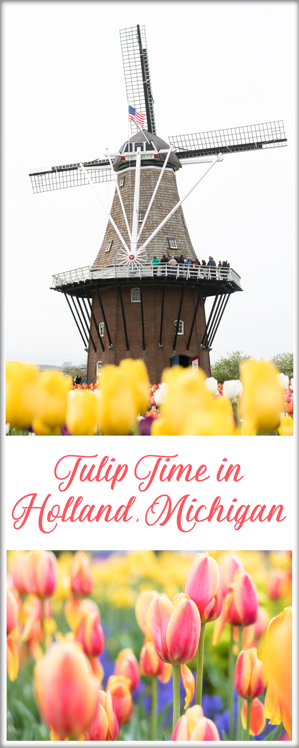 A guide to Tulip Time in Holland, Michigan. What to see & do! #michigan #holland #tulips