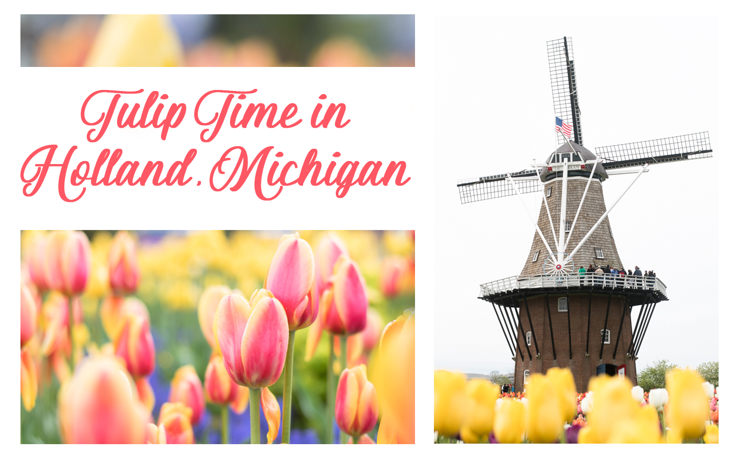A guide to Tulip Time in Holland, Michigan. #holland #michigan