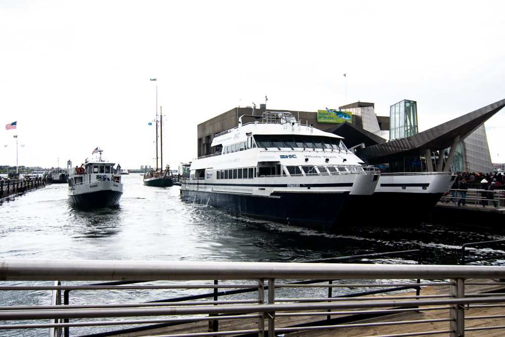 Boston Harbor Cruises Whale Watching Tour