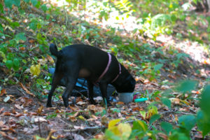 Tips for hiking with your dog this fall