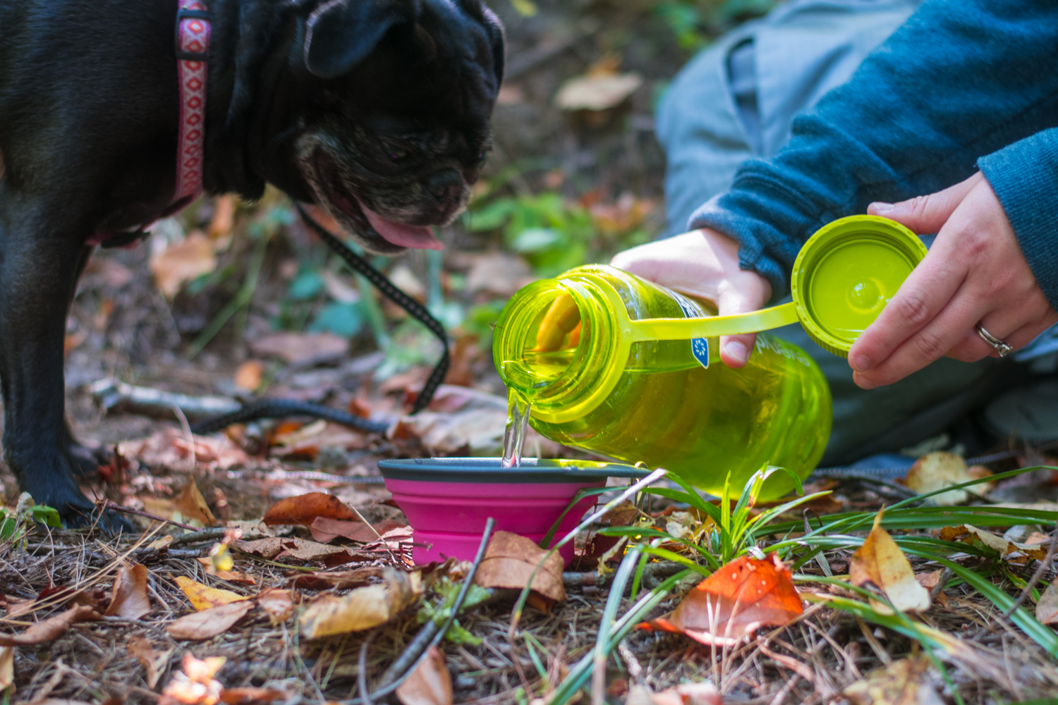 Tips for hiking this fall with your dog