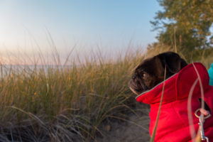 Tips for hiking with your dog this fall.