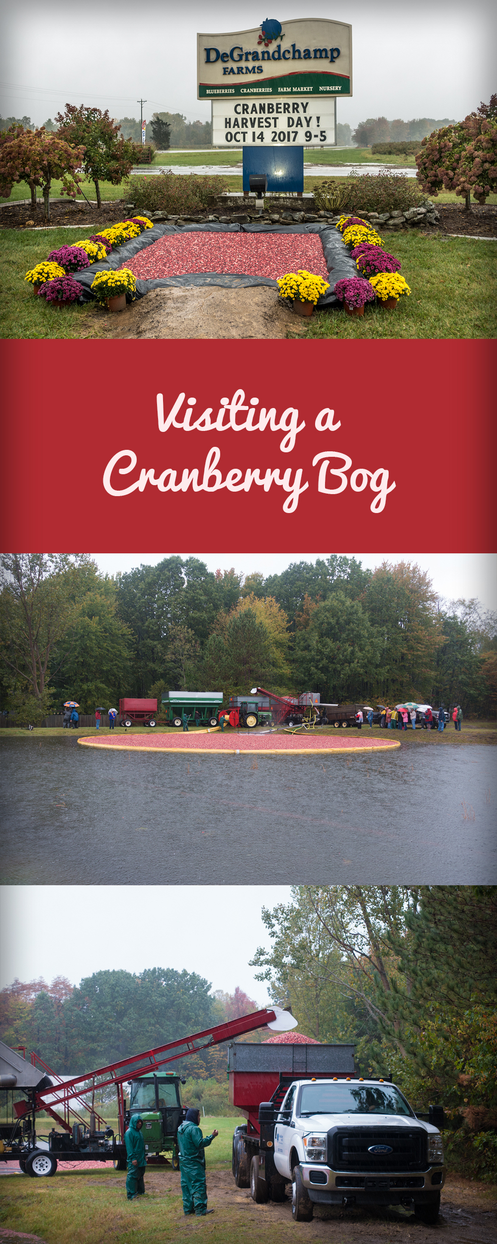 Visting a Cranberry Bog: See all the work that goes into harvesting cranberries!