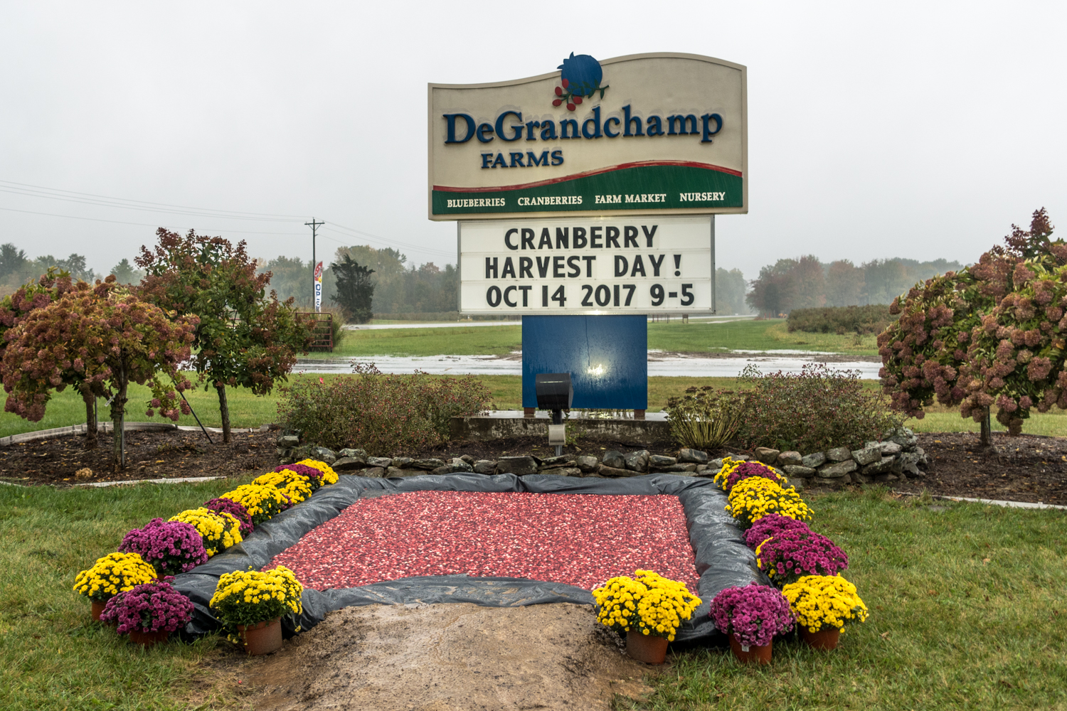 DeGrandChamp Farm's in South Haven, Michigan. Every year the farm invites the public out for harvest day.
