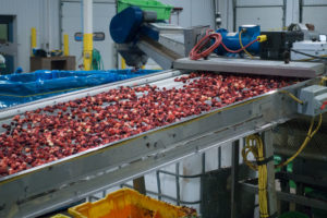 Cranberry Harvest: see the process of how the cranberries are harvested.