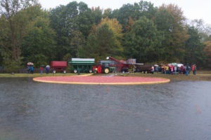 Visiting a cranberry harvest: see all the work that goes into harvest the berries.