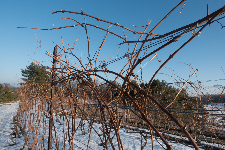 winter at the vineyard
