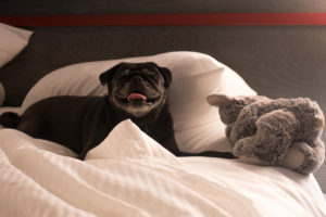 HotelRED: A pet-friendly hotel located in Madison, WI