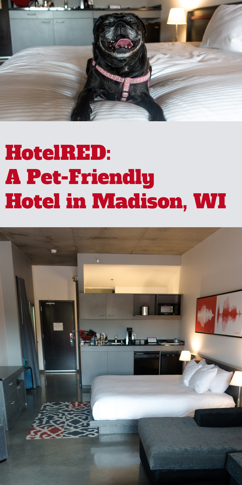 HotelRed: Pet-Friendly Hotel in Madison, WI is the perfect place to stay during your next trip to Madison, Wisconsin. This modern college town boutique hotel is the perfect place to stay! #Madison #Wisconsin #Midwest #petfriendly #hotel #travel #weekendgetaway #dog #wanderlust #explore