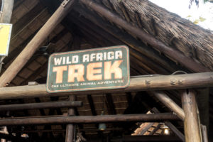 This review of Disney's Wild Africa Trek at Disney's Animal Kingdom will show you why you should book a tour on your next Disney World Vacation! #disney #Waltdisneyworld #travel #travelguide #familytravel