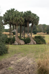 Disney's Wild Africa Trek: What to expect on this VIP tour in Animal Kingdom.