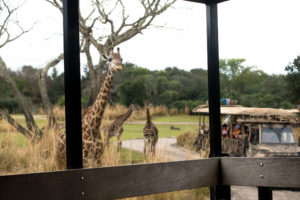 This review of Disney's Wild Africa Trek at Disney's Animal Kingdom will show you why you should book a tour on your next Disney World Vacation!