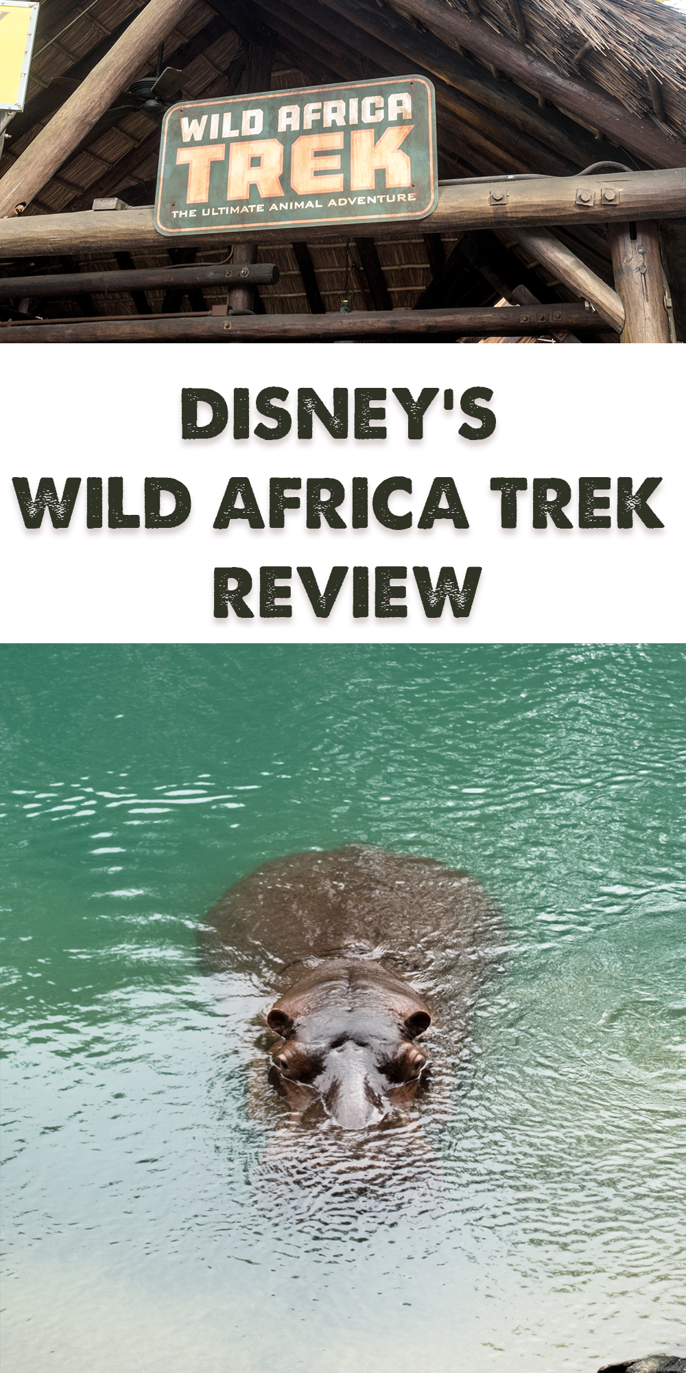 This review of Disney's Wild Africa Trek at Disney's Animal Kingdom will show you why you should book a tour on your next Disney World Vacation! #disney #disneyworld #animals #animalkingdom #Florida #Orlando