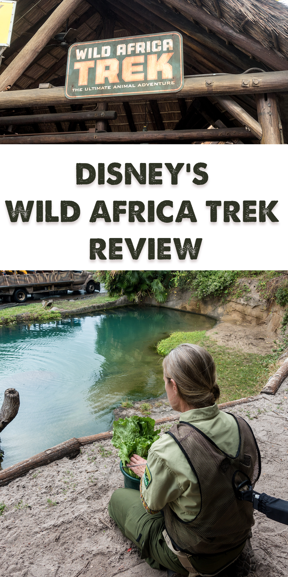 This review of Disney's Wild Africa Trek at Disney's Animal Kingdom will show you why you should book a tour on your next Disney World Vacation! #disney #waltdisneyworld #africatrek #animalkingdom #travel #traveltips #Florida