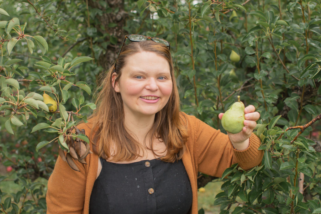 Picking pears at the local orchard!